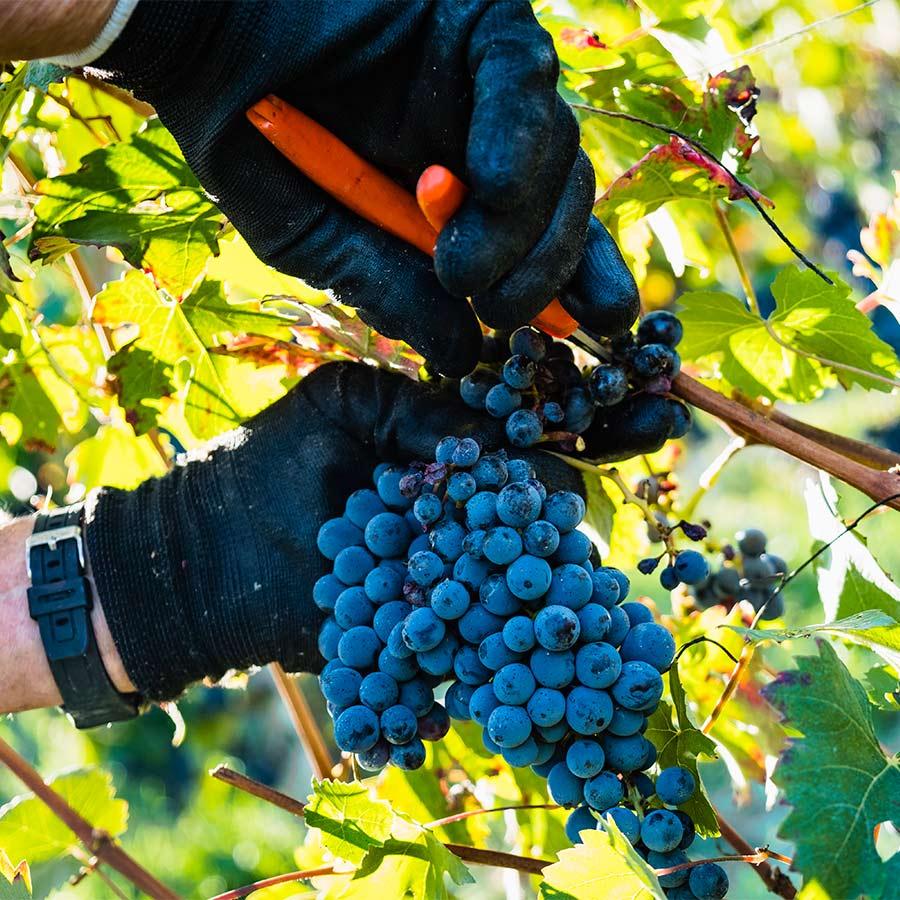 azienda agricola e vinicola in piemonte