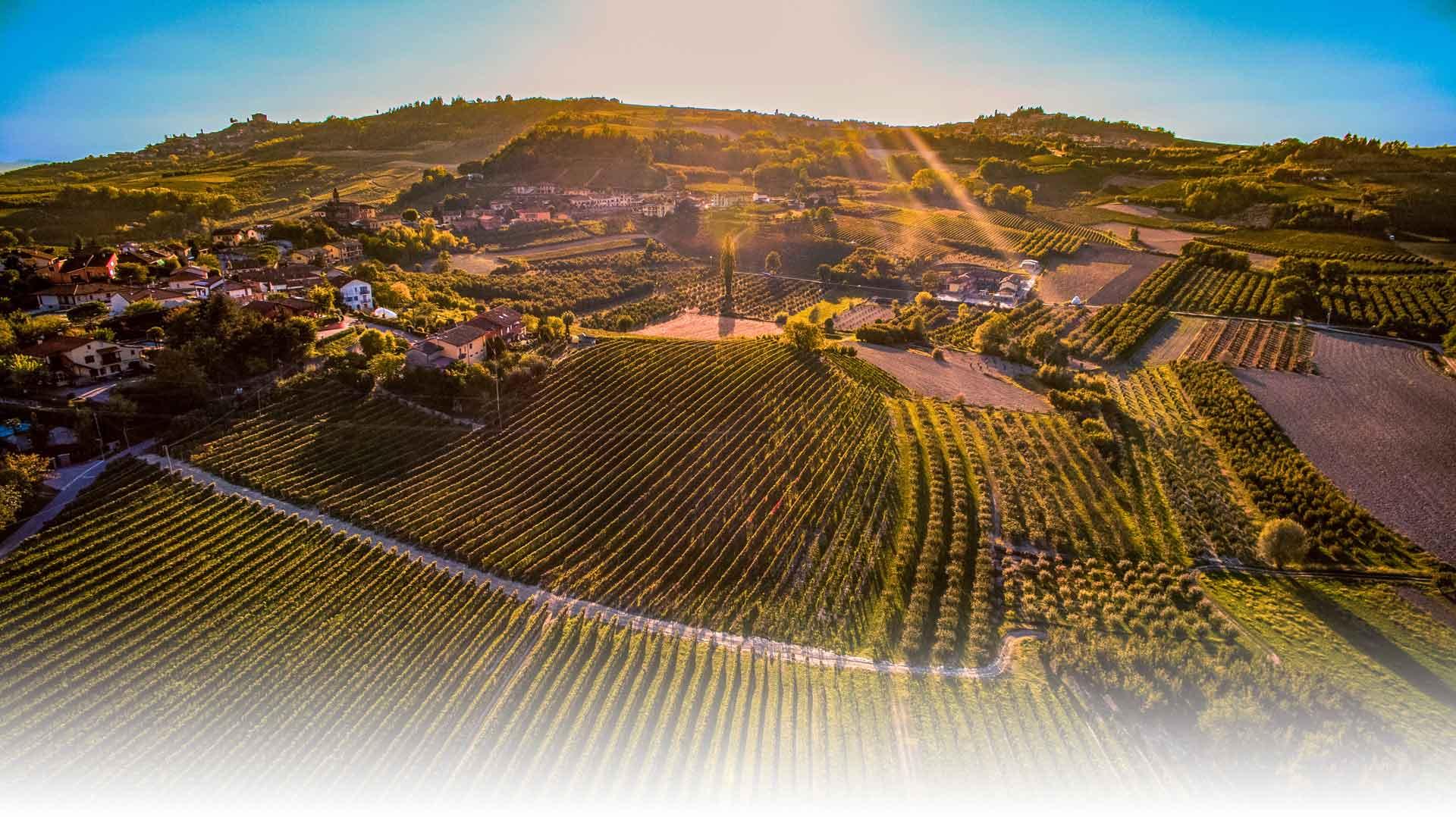 massucco-azienda vinicola lange cuneo