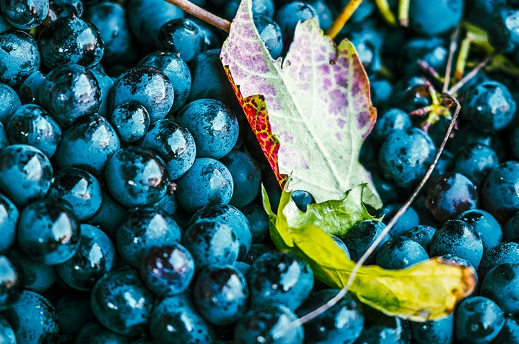La storia della viticoltura
